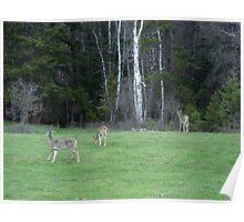 Deer Heaven Poster