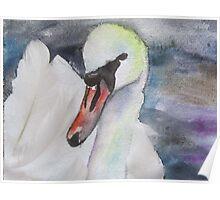 Royal Swan 3 Poster