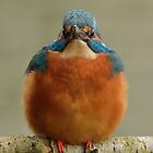 Kingfisher - III (Alcedo atthis) by Peter Wiggerman
