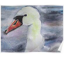 Royal Swan 4 Poster