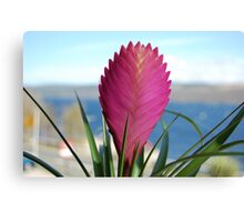 Flower of Loch Ness Canvas Print