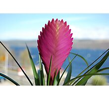 Flower of Loch Ness Photographic Print