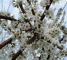 Golden Guage Plum Blossoms by Gregory Ewanowich