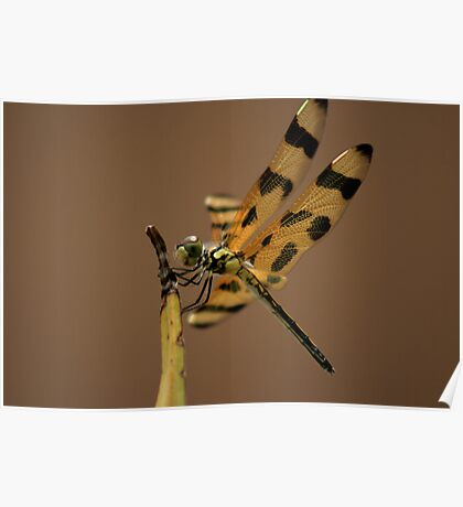 Dragon Fly II Poster