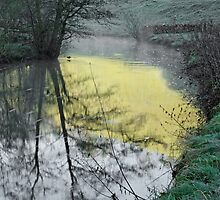 Reflections of Fishpond Bank by Rod Johnson