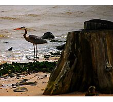 Lonely Beach Hunter Photographic Print
