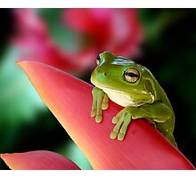 "A Frog's ""Point"" of View Photographic Print"