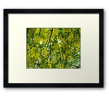 Yellow Profusion Framed Print