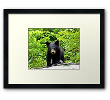 Canadian Bear Cub  Framed Print