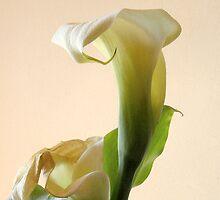 cala lily by Loreto Bautista Jr.