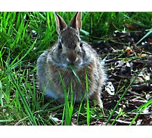 This is Good Grass! Photographic Print