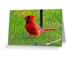 Red Red Red Greeting Card
