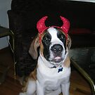 Devil Dog by BubbaGeorge