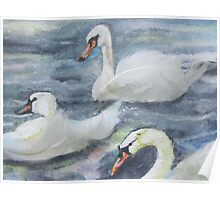 Royal Swans 2 Poster