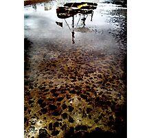 sea shepherd Photographic Print
