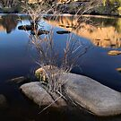 Joshua Tree National Park Series - Barker Dam Pond - Stillness by Philip James Filia