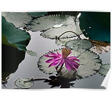 From The Lotus Pond Poster