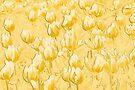 Yellow Tulips II line art by PhotosByHealy