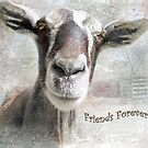 """Goat- """"Friends Forever"""" ~ Greeting Card by Susan Werby"""