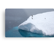 Snow storm, freezing wind ~ Life in the Antarctic goes on!! Metal Print