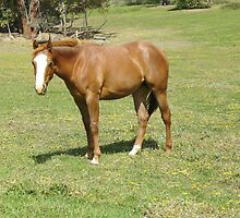 Quarter Horse filly by skyhorse