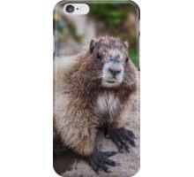 Marmot at Mount Rainier's Myrtle Falls iPhone Case/Skin