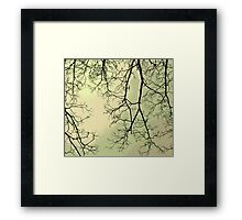 Winter Limbs Framed Print
