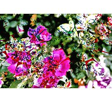 Spilt Paint on Flowers Photographic Print