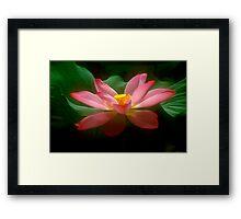 Lotus #18 Framed Print
