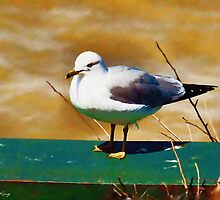The Seagull by Barry W  King