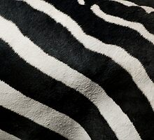 Zebra Hair by Jim Felder