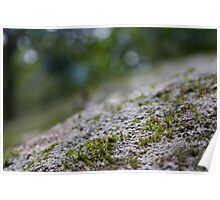 Mossy Poster