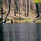 Beaver Pond, Gatineau Park, Quebec by Shulie1