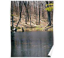 Beaver Pond, Gatineau Park, Quebec Poster