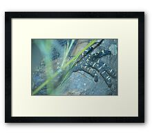 Monster Claw Framed Print