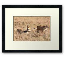 Lions Guarding a Kill, Maasai Mara, Kenya  Framed Print