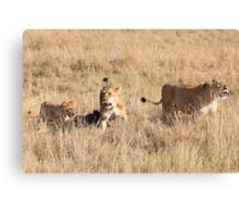 Lions Guarding a Kill, Maasai Mara, Kenya  Canvas Print