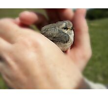 In my hands, you are safe Photographic Print