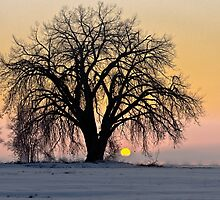 Cottonwood Cold Sunrise by nikongreg