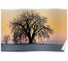 Cottonwood Cold Sunrise Poster