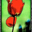 Tulipmania by ragman