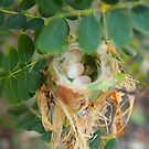 Humming birds nest  by jdmphotography