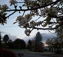 Pear Blossom Sunset by lareejc