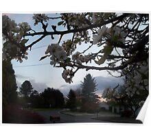 Pear Blossom Sunset Poster