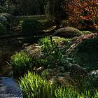 Toowoomba Japanese gardens by Murray Swift