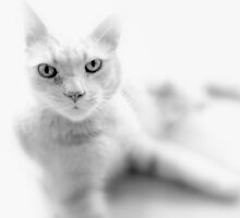Willie In Black And White by fruitofpassion