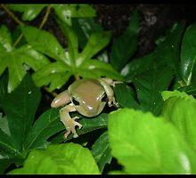 Froggieee by elizabethrose05