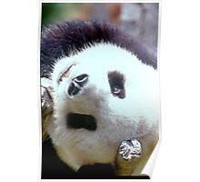 Playing Panda Poster