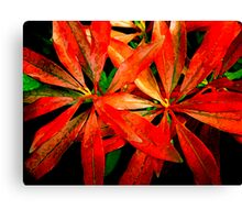 flowers of the forest ... Canvas Print