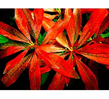 flowers of the forest ... Photographic Print
